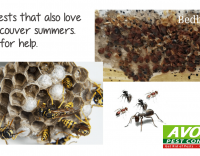 Ready for Summer Pests in Metro Vancouver?
