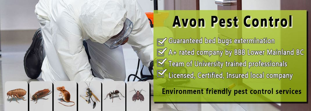 Avon pest control Vancouver in action