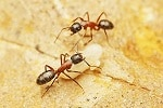 Identifying Carpenter Ants: Signs You Have a Carpenter Ant Problem
