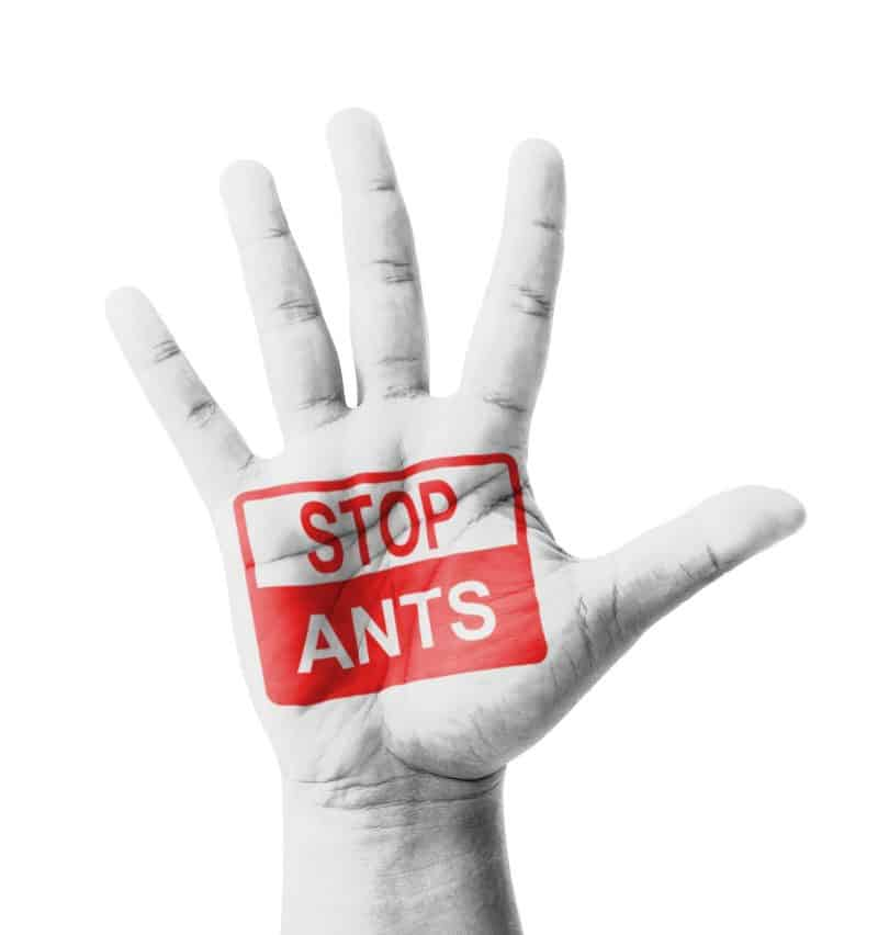 Red Alert for Fire Ants At Home: Call Surrey Ant Control ASAP