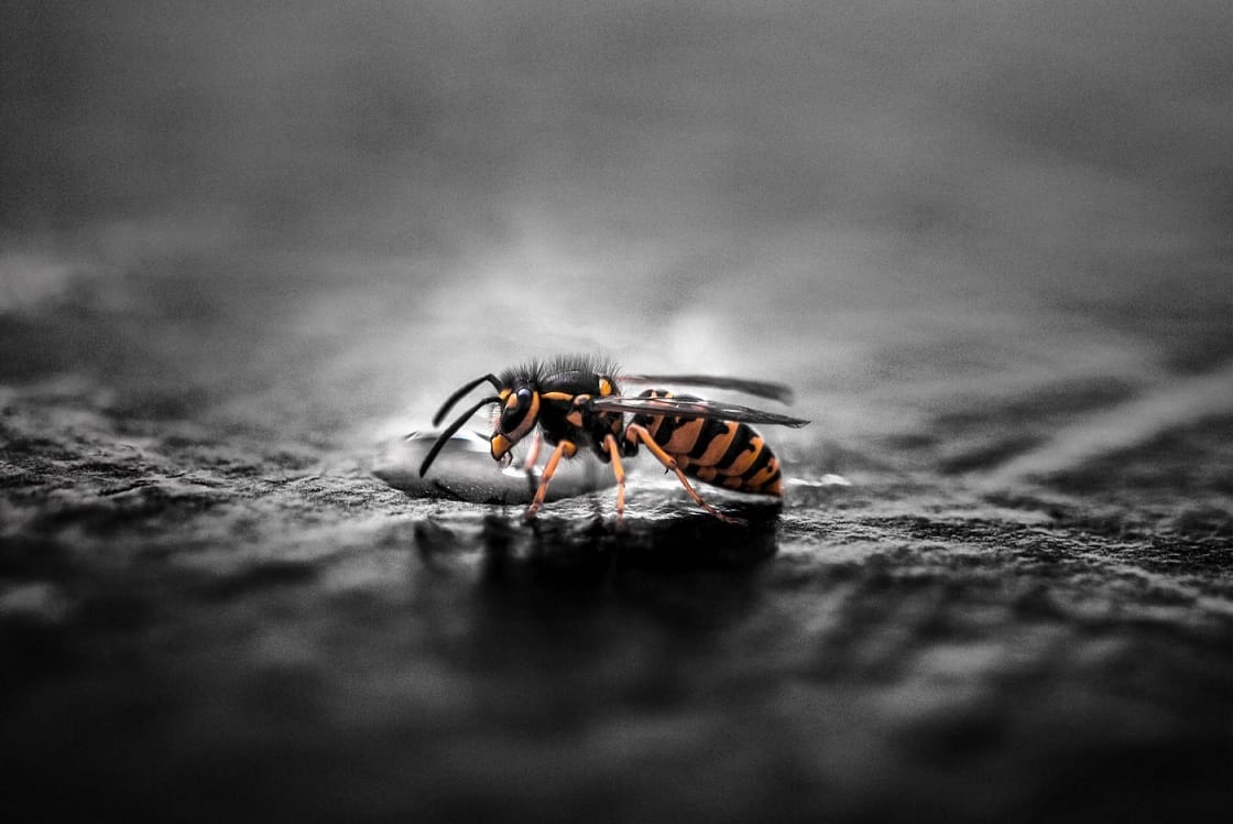 4 Reasons Professional Wasp Removal Is Necessary